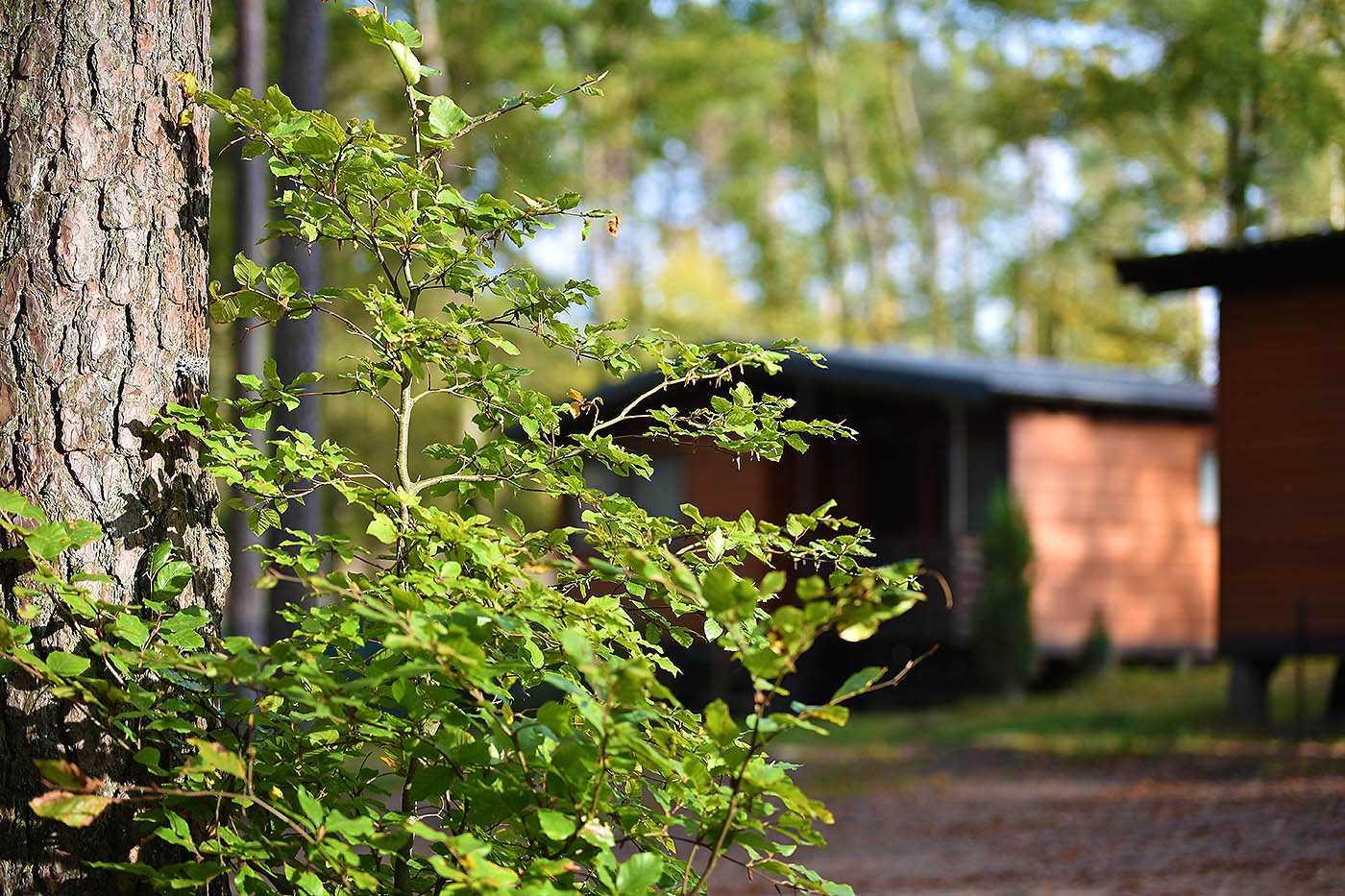 domki letniskowe kaszuby siedlisko bartek63